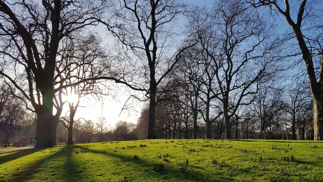 St James's Park - sun casts long spring shadows