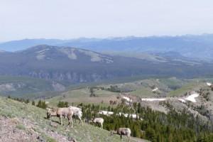 Mont Washburn Yellowstone NP