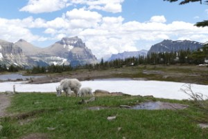 Hidden Lake Glacier NP