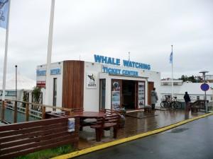 Husavik et l'obersation des baleines