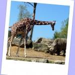 Sorties au Zoo