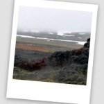 La région du lac Myvatn