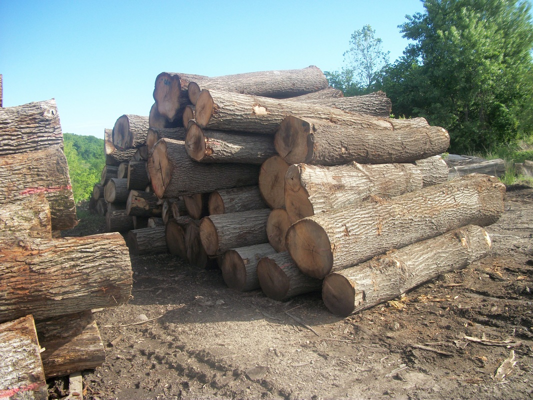 Hackberry Firewood Quality