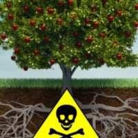 Fruto da árvore envenenada