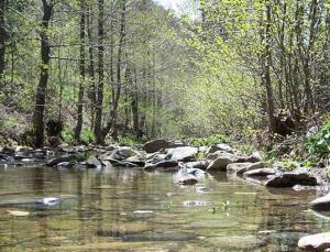 Balıkesir'den sonra Kocaeli'de de ormanlık alanlara giriş yasaklandı
