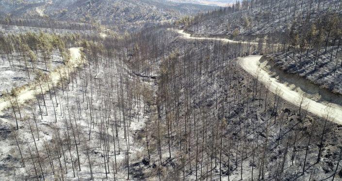 doç. dr. acar: i̇klim krizi yangınların söndürülmesini zorlaştırıyor
