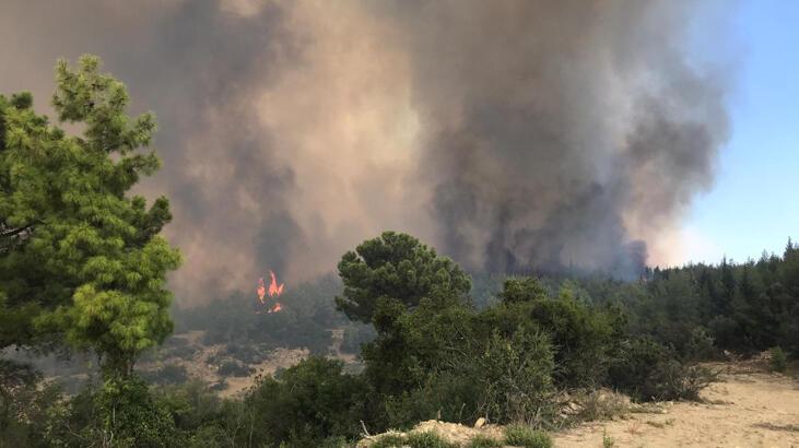 güneydoğulu ihracatçılardan yanan ormanlar için 250 bin fidan bağışı