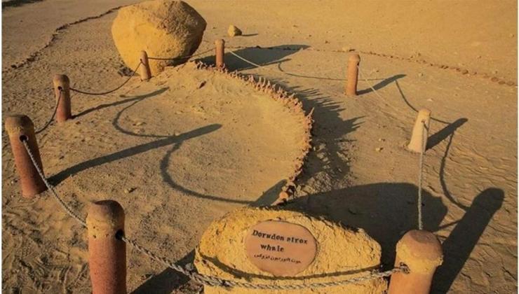 43 milyon yaşında dört ayaklı balina fosili keşfedildi