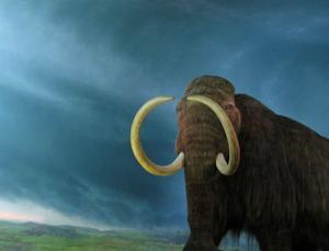 Biyobilim şirketi Colossal, nesli tükenen mamutları geri getirmeyi planlıyor