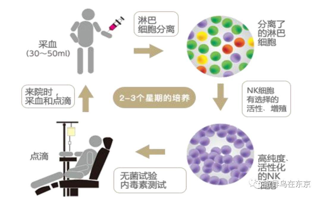 日本干細胞醫院-N2診所:NK免疫細胞療法,脂肪干細胞療法丨日本整容整形_日本醫療_變美網-了解日本美容美妝 ...