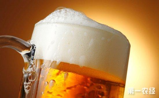 啤酒泡沫是如何產生的?啤酒泡沫有什么作用? - 糖酒快訊 - 第一農經網