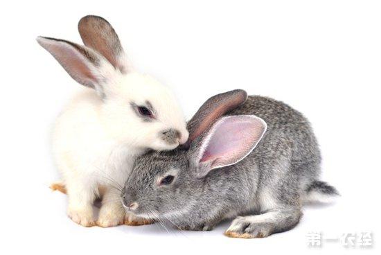 兔子種類有哪些?兔子品種大全 - 養殖技術 - 第一農經網