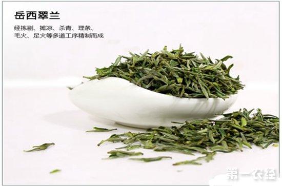 安徽茶葉品種有哪些?安徽十大名茶簡介 - 茶葉知識 - 第一農經網