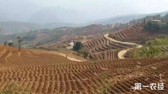 2018年我國耕地輪作休耕試點面積增至2400萬畝 - 農業要聞 - 第一農經網
