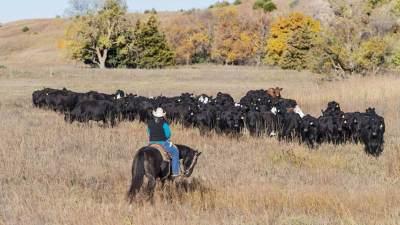 herd13_7800x4300