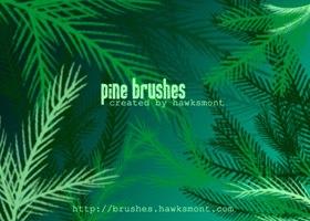 pine-brush