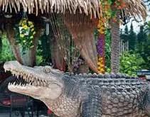 Rêver d'alligator