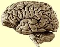 Rêver du cerveau