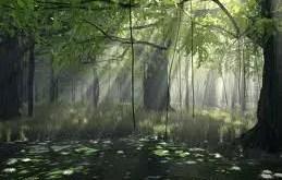 Rêver d'être dans une forêt