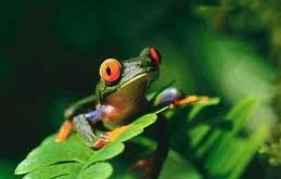 Rêver de grenouille
