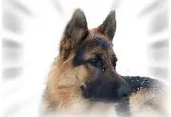 Rêver de chien
