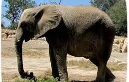 Rêver d'éléphant
