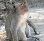 Rêver de singe