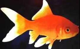 Rêver de poissons