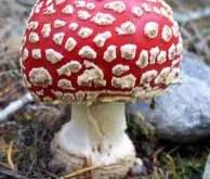 Rêver de champignon