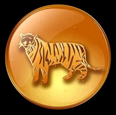 ecarte tigre
