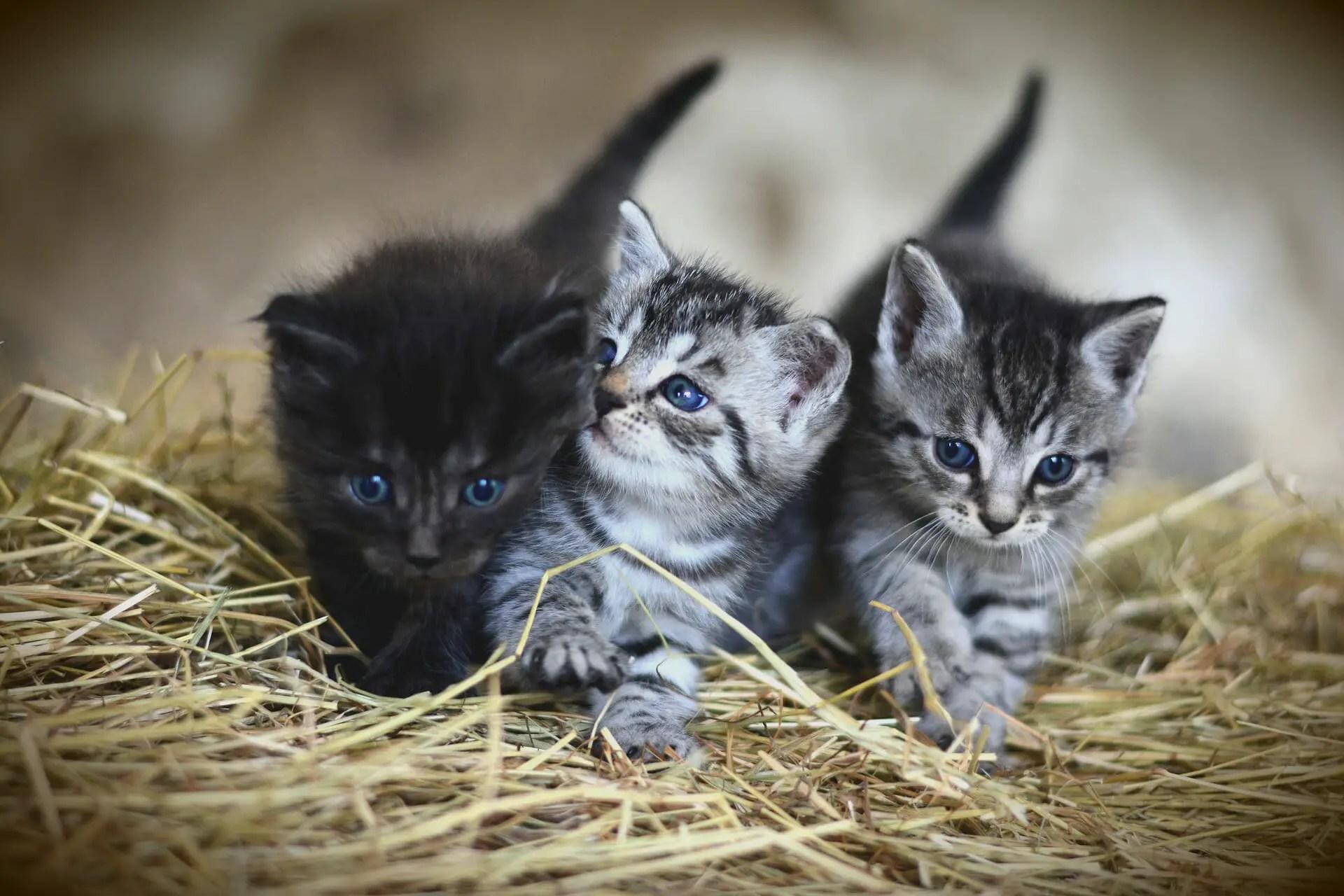 Graisse chattes baisée