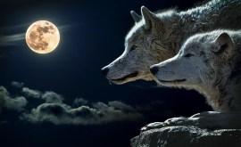 Rêver de loup ou de loup-garou