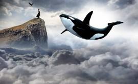 Rêver de baleine