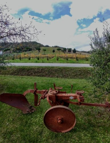Tenuta Casali view 2
