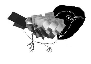 Fugle illustration