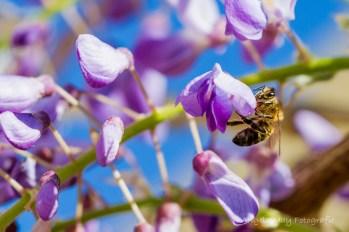 ...und die Bienchen sammeln fleißig