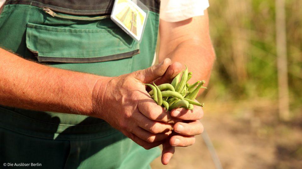 Ackertalk zur Pflanzengesundheit