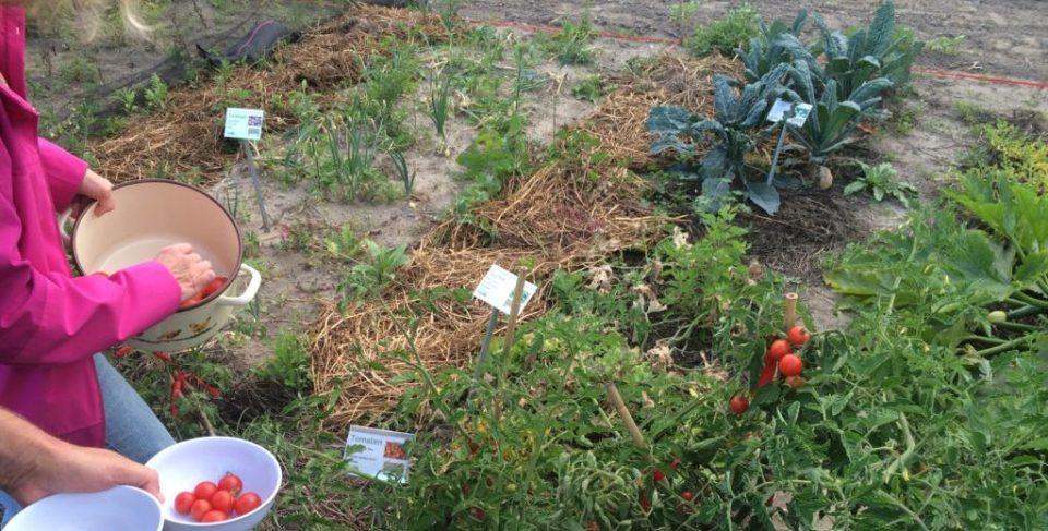 Tomaten & anderes Gemüse auf dem Weltacker
