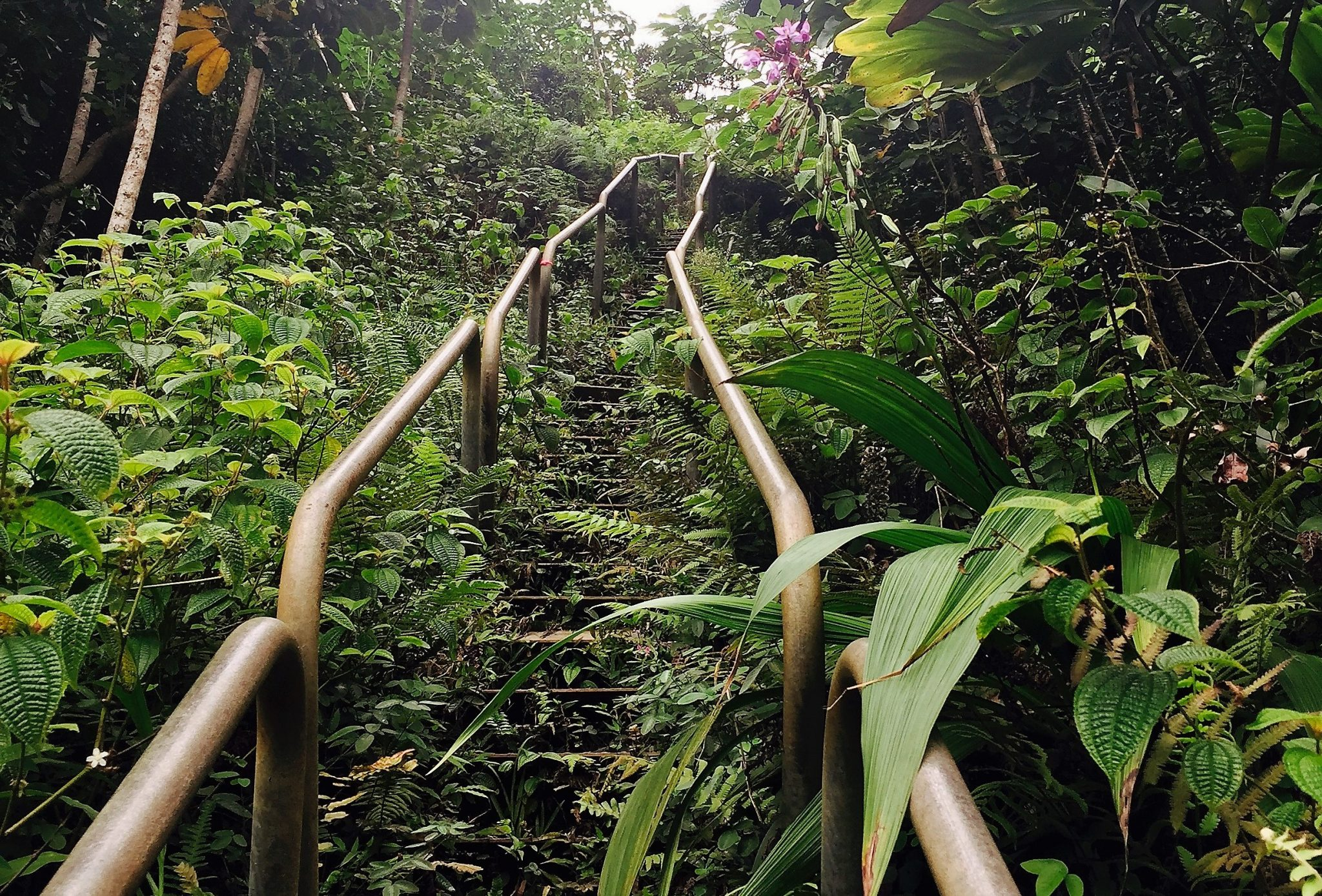 Be a rebel: Climb the Stairway to Heaven (Haiku Stairs) in Hawaii