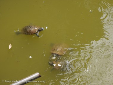 Turtles. That is all.