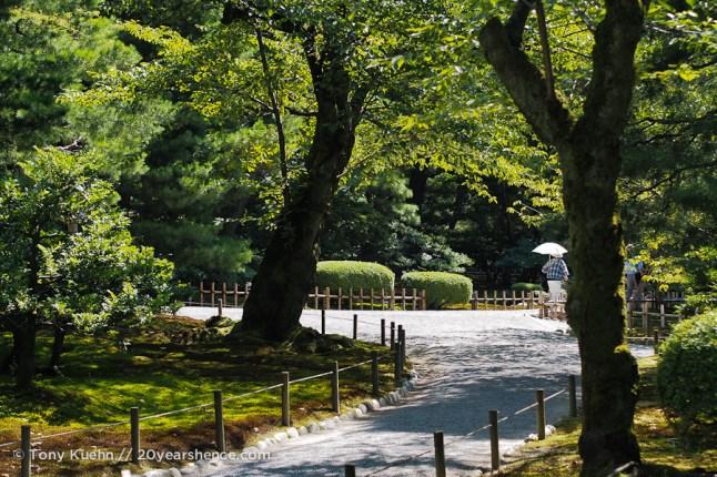 A pathway through the garden