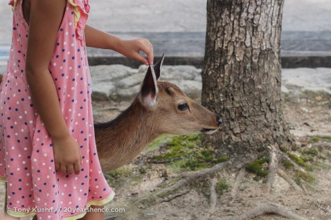 Not all Japanese children were afraid of the deer