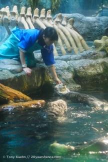 Feeding the sea otters