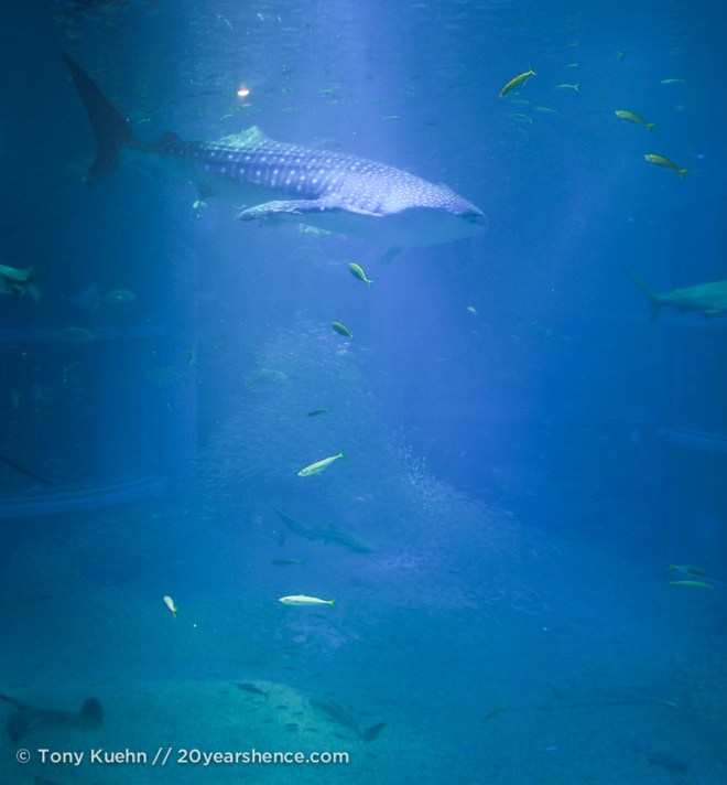Whale shark whale shark, for fun and love and joy...