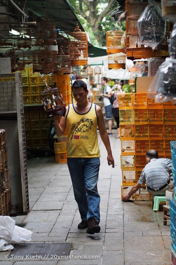 In the bird market