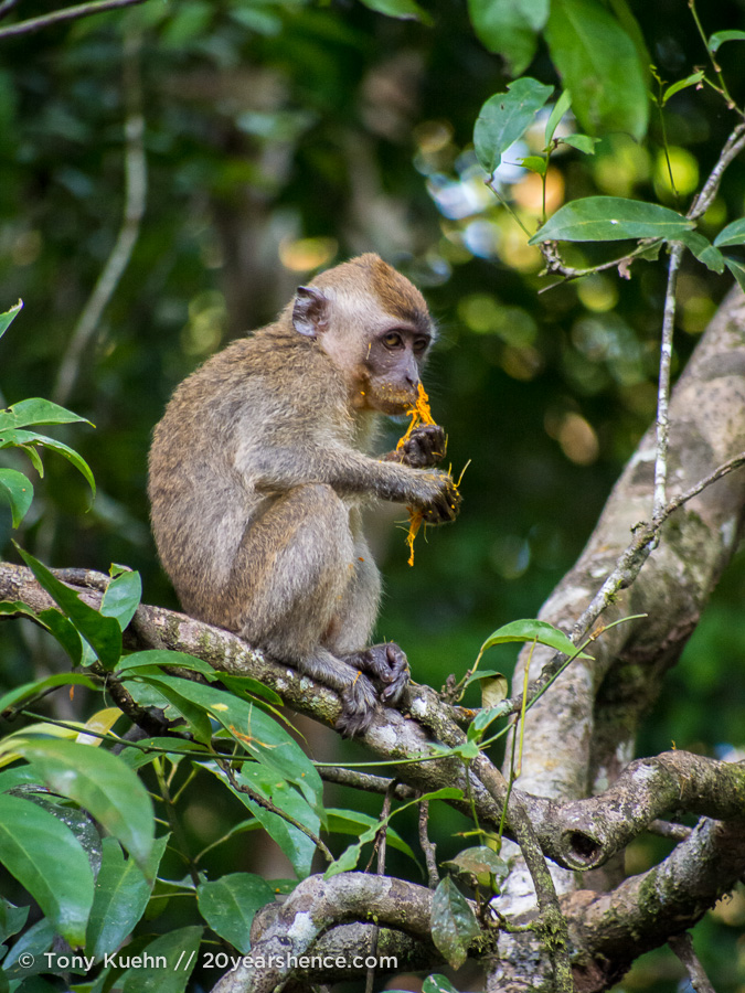 monkey eating in a tree
