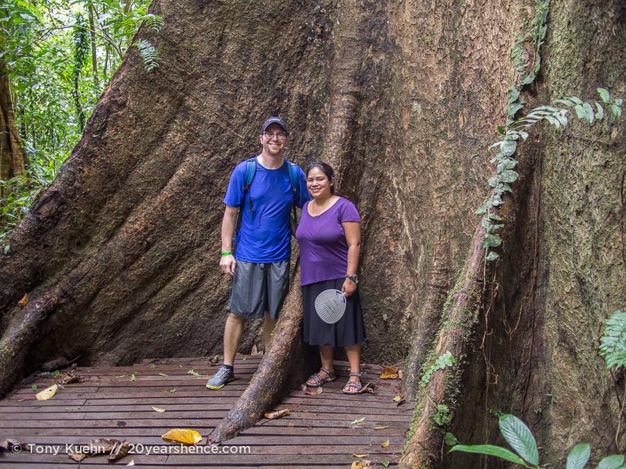 Giant tree, Mulu National park