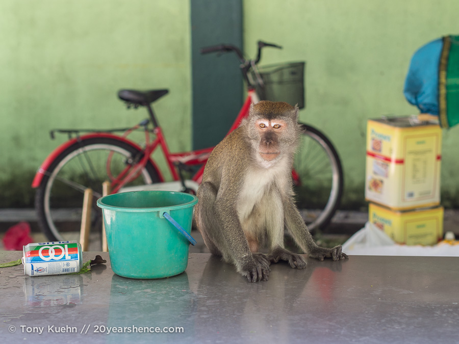 Sneaky monkey wants your snacks