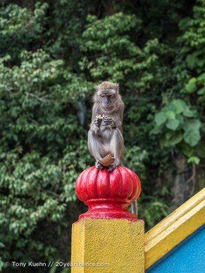 Scavenger Monkey at the Batu Caves