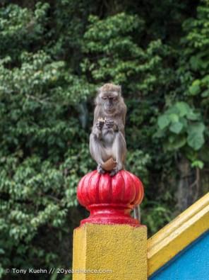 Scavenger Monkey at the Batu Caves
